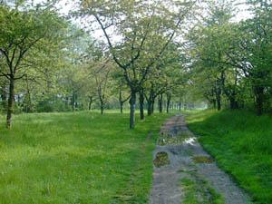 Ilse-Radweg
